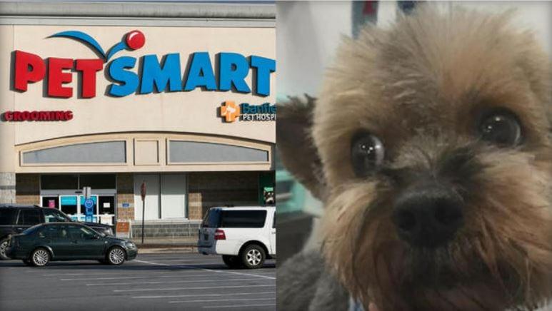 PetSmart deaths