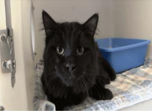 barnum-cat