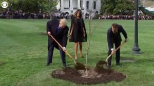 macron-and-trump-friendship-tree